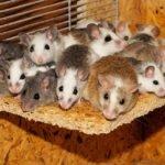 mice at home