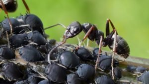 ants in your kitchen