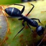 ant slider