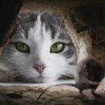 cat-4068840_1280
