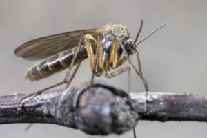 How to Defend Your Property Against Mosquitoes