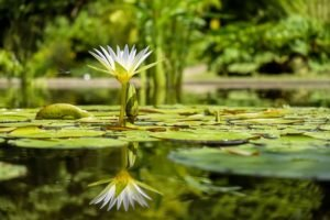 ponds and mosquito control