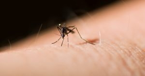 Mosquito control for your yard