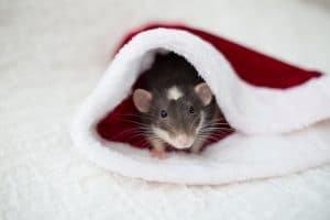Holiday Pest Control