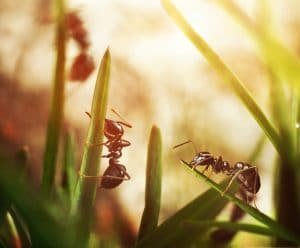 spring pests ants in your yard