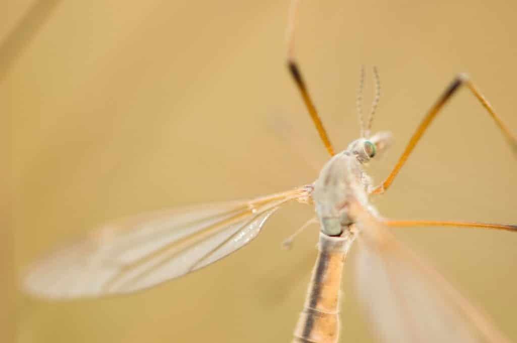 mosquito activity