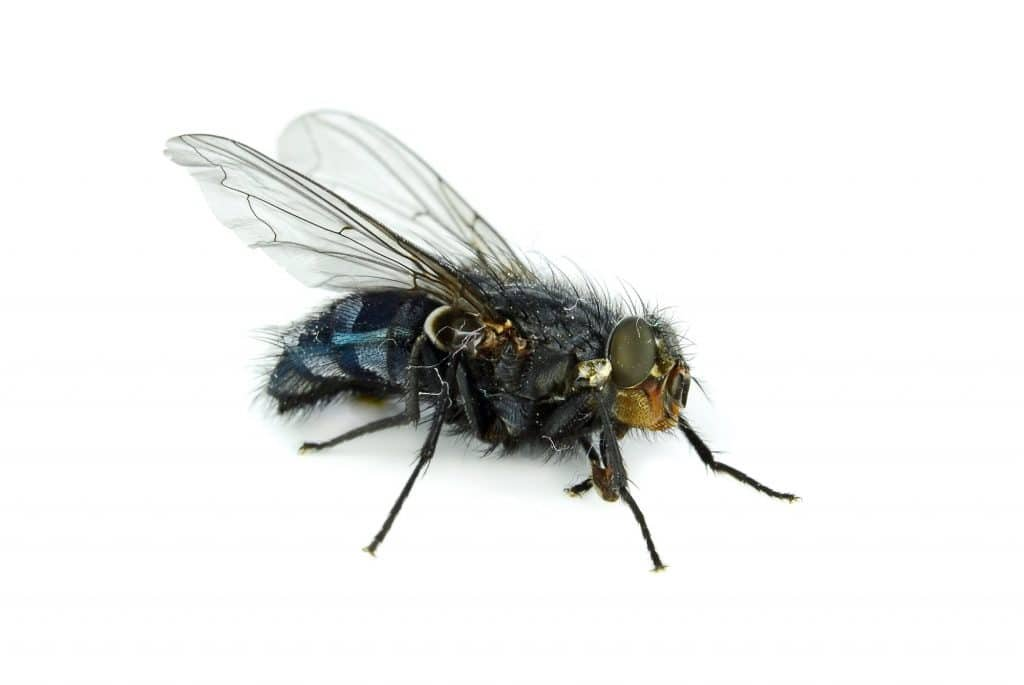 fly lands in your food