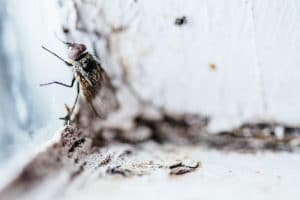 pest proofing your home