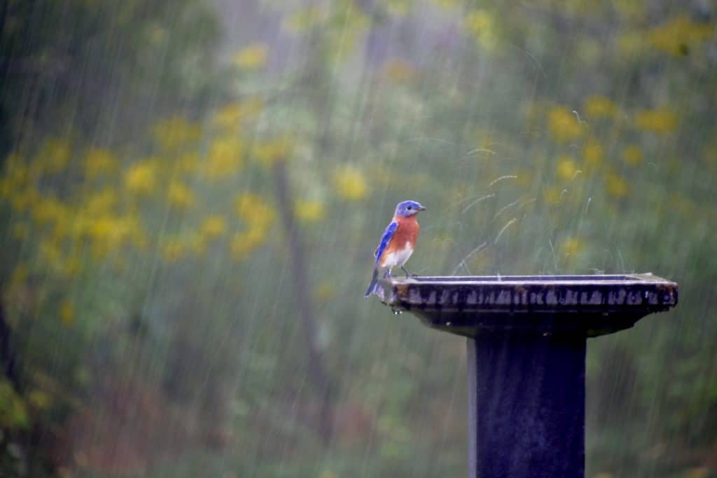pests during storms