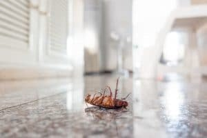 pest proof your home