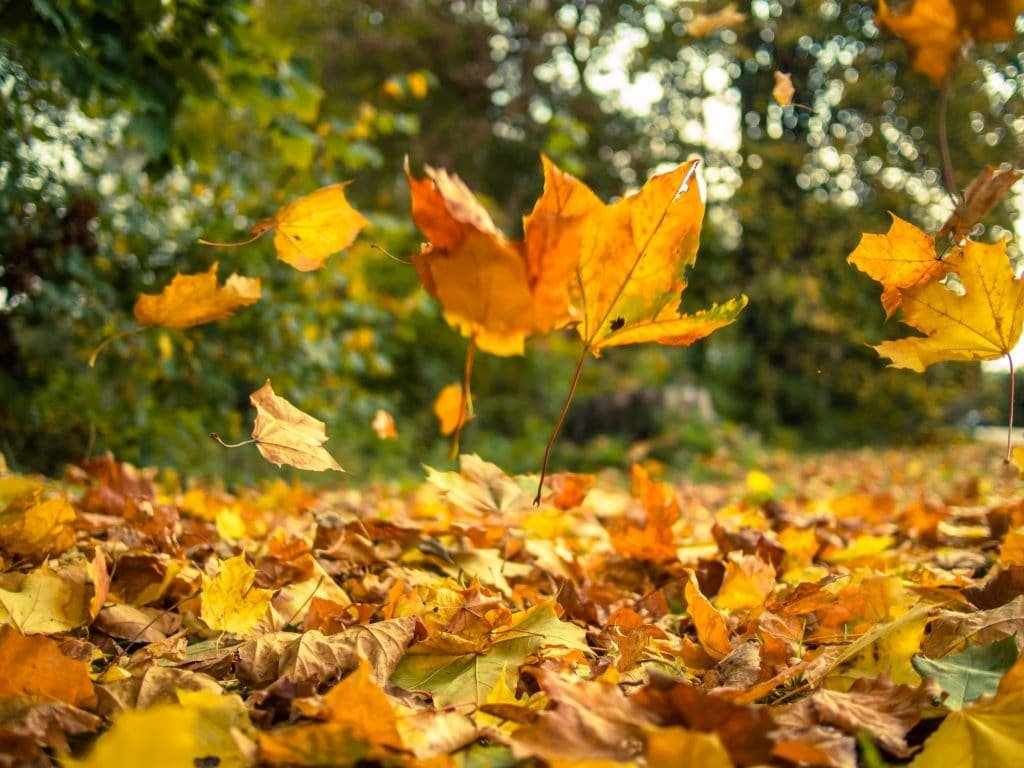 fall pest control services